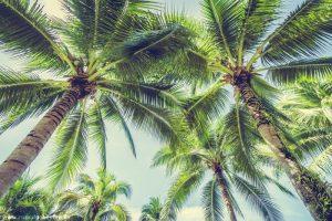 Quê hương Bến Tre – Hàng dừa xanh ngát tuổi thơ tôi